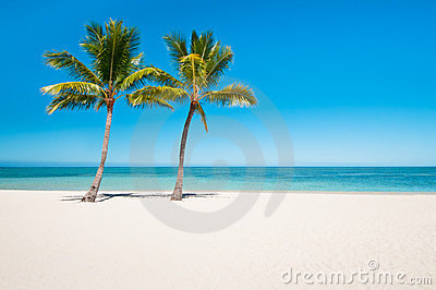 Empty tropical beach with palms