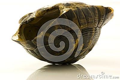 Empty turtle shell turned upside down