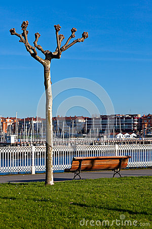 Empty wooden park bench with Marina View