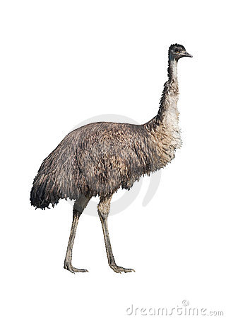 Free Emu Cutout Stock Images - 2500314