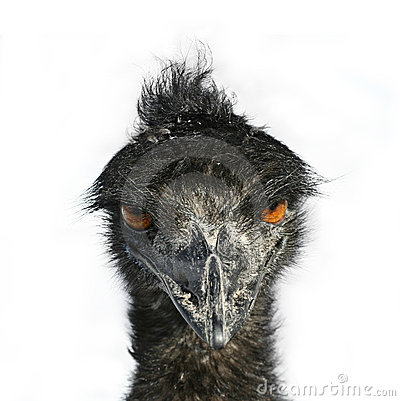 Free Emu Eyes Stock Image - 4050501