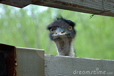 Emu: i am not ET