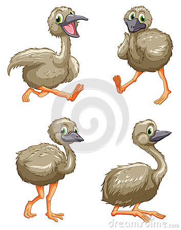 Free Emu Ostrich Series Royalty Free Stock Photos - 24653408