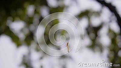 En bisarr dans av en larv som kryper på en rengöringsduk Trevlig n?rbild Mycket filmiskt Natur anhydrous arkivfilmer