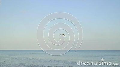 En ensam fiskmås flyger över havet i molnfritt väder, frihet, naturen, lugn, lite ultrarapid stock video