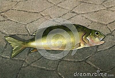 En fisk ut ur bevattnar - Digital konstverk