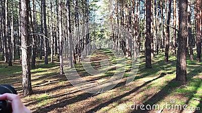 En flicka med kamera tar bilder i en tallskog som reser och vandrar Enhet med naturen Fritidssemester På väg in arkivfilmer