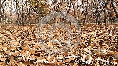 En los bosques de finales del otoño, el suelo estaba cubierto de hojas almacen de metraje de vídeo