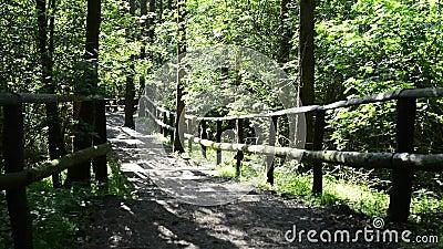 En parc national dans Lubin, la Pologne clips vidéos