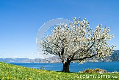En tree