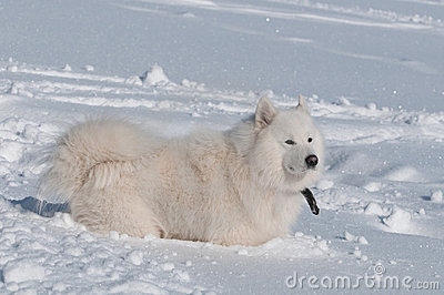 En una nieve profunda