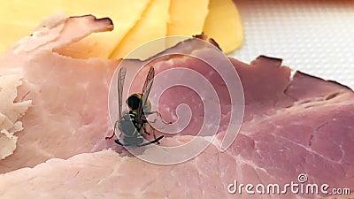 En vanlig gul varp och insektsställen och äter kött arkivfilmer