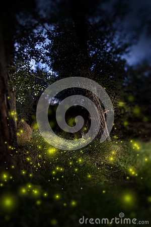 Free Enchanted Dark Forest Stock Image - 25998051