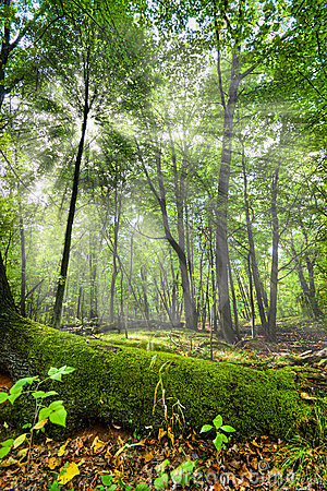 Free Enchanted Forest Stock Photography - 3602182