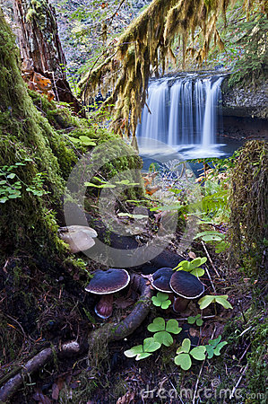 Free Enchanted Forest With Waterfall Royalty Free Stock Photo - 34836985