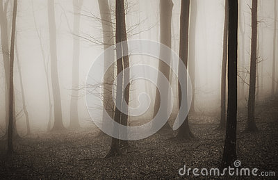 Enchanted mysterious forest with fog in winter