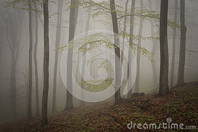 Enchanted mystical forest with fog in autumn