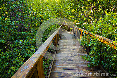 Enchanted Wooden Path