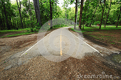 End of road in forest