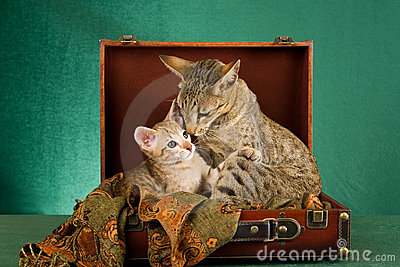 Endearing moment between mom and kitten