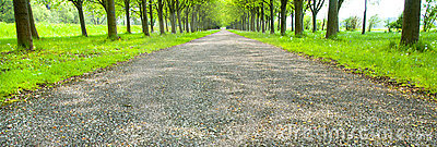 Endless canopy road