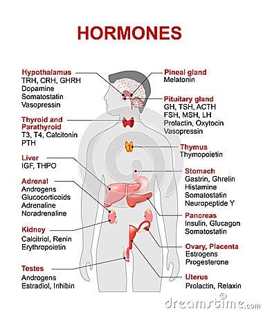 Endocrine Gland And Hormones Cartoon Vector   CartoonDealer.com ...