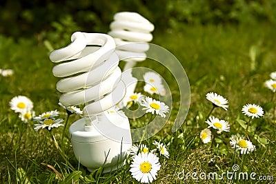 Energy saving bulbs on daisy field