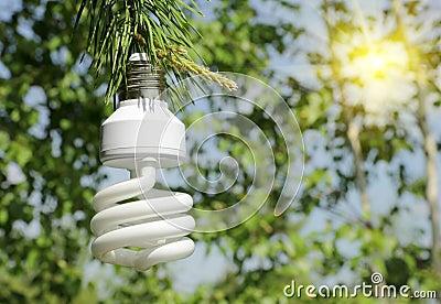Energy saving light bulb on a branch of pine