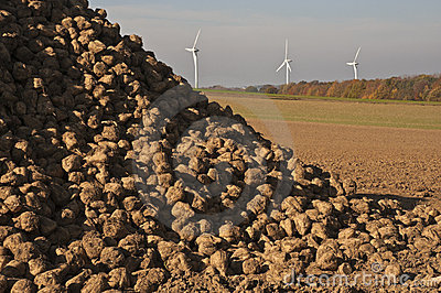 Energy, sugar beets and wind turbines