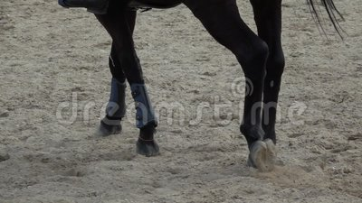 Enganches del caballo que corren a trav?s de un campo arenoso v?deo de la c?mara lenta almacen de video
