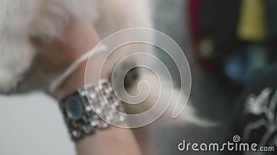 Enge pommeranische Hunde Weiße Welpe in den Händen der Herrin Mädchenhund stock video