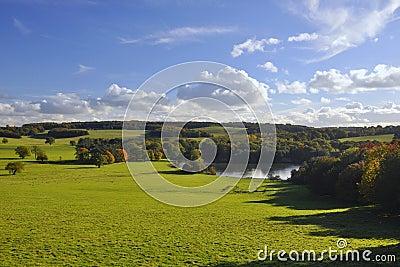 Engelsk bygd: grön fält, trees och lake