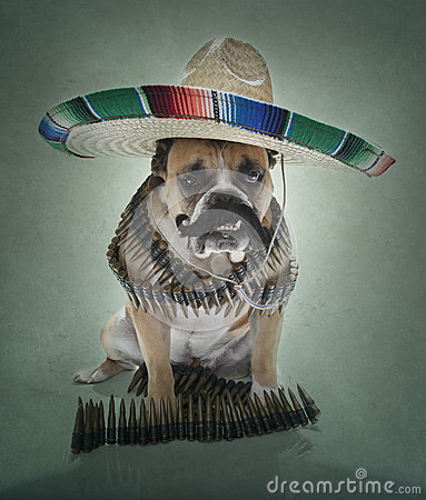 English Bulldog Bandito Portrait large sombrero