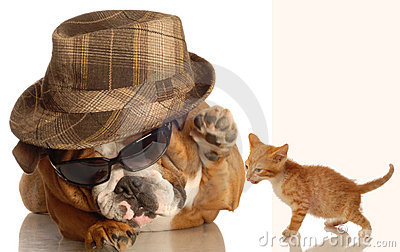 English bulldog and kitten
