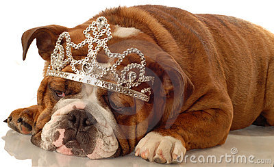 English bulldog princess