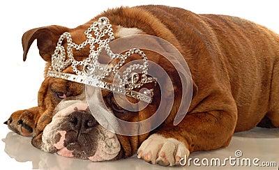 English bulldog princess