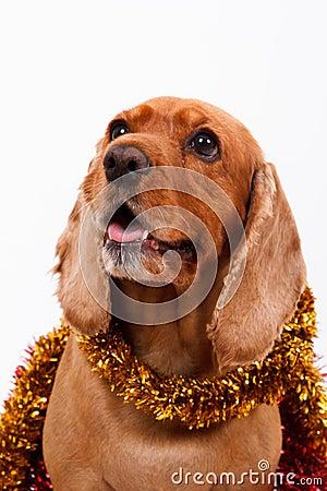 English Cocker Spaniel Dog and Christmas Ornament