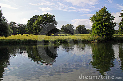 English countryside, cows and a river