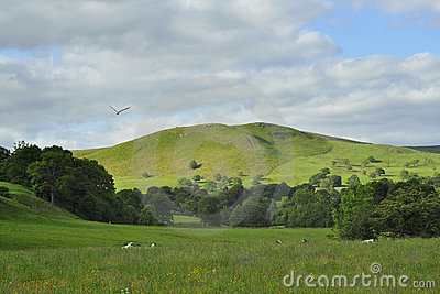 English countryside landscape in summer