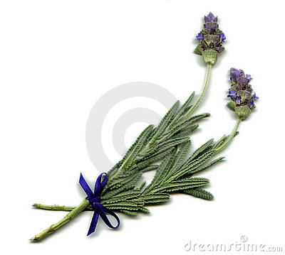 Free English Lavender Sprig Royalty Free Stock Images - 1550809