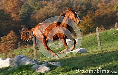English racing horse