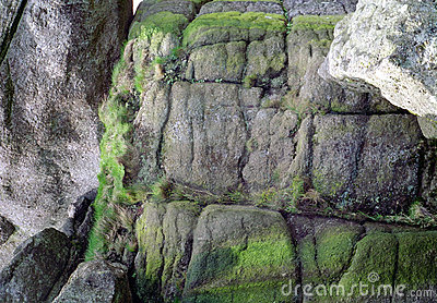 English Sea Wall Detail Devon England