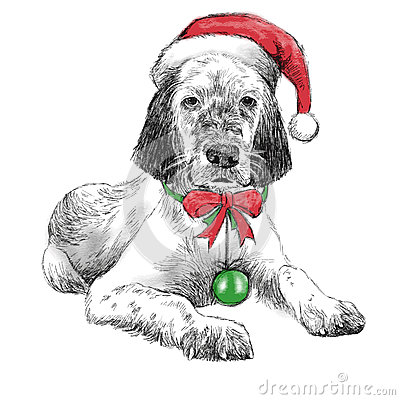 Free English Setter With Christmas Hat Stock Photo - 47468560