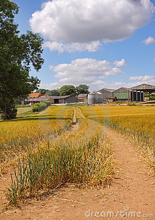 An English Summer Landscape of ripening Wheat