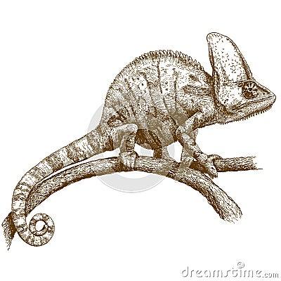Free Engraving Illustration Of Chameleon Stock Photos - 83995443
