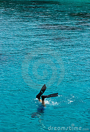 Enjoin the snorkeling