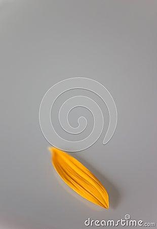 Enkel één verlaten bloemblaadje