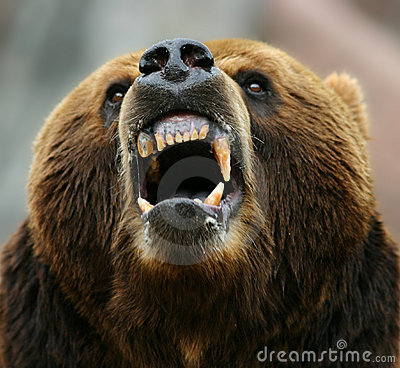 Free Enraged Brown Bear Royalty Free Stock Image - 6117736