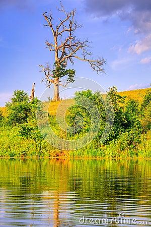 Ensamt träd