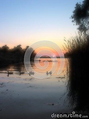 Enten, die den Sonnenuntergang - 1 überwachen
